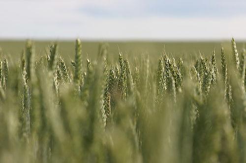 Controllo agroalimentare