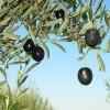 agroalimentare italiano