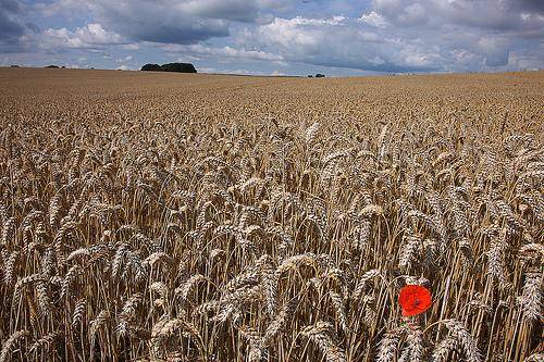 Protocollo per le pratiche agricole